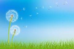 Dandelion flower background Royalty Free Stock Photos
