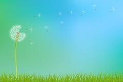 Dandelion flower background Royalty Free Stock Image
