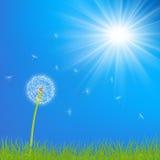 Dandelion flower background Stock Photo