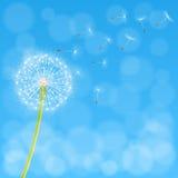 Dandelion flower background Royalty Free Stock Photography