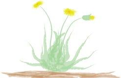 Dandelion. Flower, blossom, bouquet, leaves, illustration Stock Photography