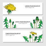 Dandelion flower, bud, leaves hand drawn vector ink color sketch isolated on white, Round frame, graphic floral Royalty Free Stock Photography