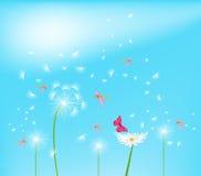 Dandelion flower field over blue sky Royalty Free Stock Images