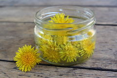 Dandelion flower in a glass jar with water. Royalty Free Stock Photo