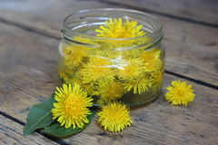 Dandelion flower in a glass jar with water. Stock Photos