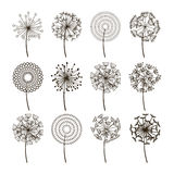Dandelion flower icons. Dandelions fluffy seeds vector silhouettes Stock Image