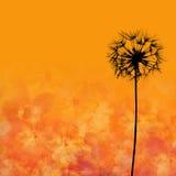 Dandelion flower illustration Stock Image