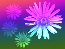 Dandelion flower rainbow background Royalty Free Stock Photography