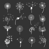 Dandelion flower set Royalty Free Stock Image