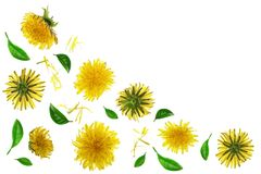 Dandelion flower or Taraxacum Officinale isolated on white background with copy space for your text. Top view. Flat lay royalty free stock photo