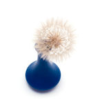 Dandelion flower in vase isolated. On a white background royalty free stock photography