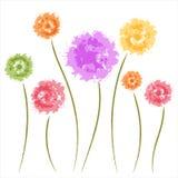 Dandelion flowers Royalty Free Stock Photo