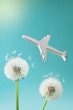 Dandelion flowers and airplane silhouette in blue sky. Travel, summer vacation, aviation and air flight concept. Dandelion flowers and airplane silhouette in stock photo