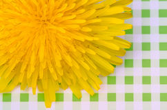 Dandelion flowers on background in green cage Stock Images