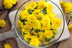Dandelion flowers in a bowl, top view. Yellow dandelion flowers in a bowl, top view royalty free stock photos