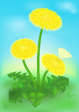 Dandelion flowers and the butterfly Royalty Free Stock Images