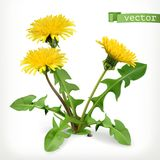 Dandelion flowers, 3d vector icon. On white background stock illustration