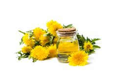 Dandelion flowers and essential oil isolated on white. Background stock images