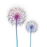 Dandelion flowers. Dandelion flower on a white background, silhouette stock photos