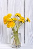 Dandelion flowers in a glass Royalty Free Stock Photos