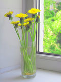 Dandelion flowers in glass Royalty Free Stock Photography