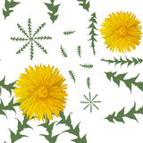 Dandelion flowers with green leaves on a white background. Seamless vector pattern. Royalty Free Stock Photo