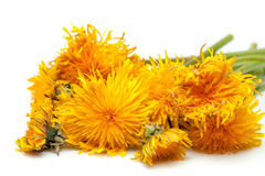 Dandelion flowers isolated on white. Dandelion flowers yellow colors with green stem lying in heap isolated on white background stock photo