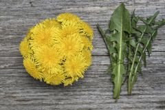 Dandelion flowers and leaves on old wooden board Royalty Free Stock Photo