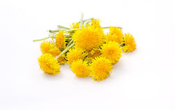 Dandelion Flowers On A White Background Stock Images