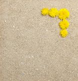 Dandelion flowers on sand texture Stock Photography