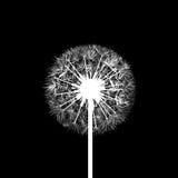 Dandelion flowers. Stock illustration. Stock Photo