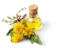Dandelion flowers and tincture  Stock Photos