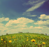 Dandelion flowers under blue sky - vintage retro style Stock Image