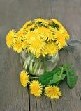 Dandelion flowers in vase Royalty Free Stock Images