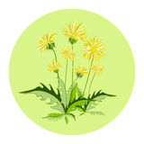 Dandelion flowers, vector icon Royalty Free Stock Photo