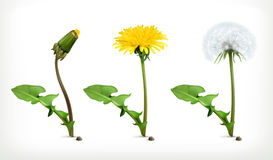 Dandelion flowers, vector icon set Stock Photo