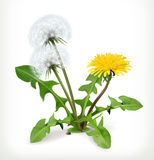 Dandelion flowers, vector icon Stock Images