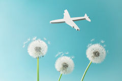 Dandelion flowers and white airplane silhouette in blue sky. Travel, summer vacation, aviation and air flight concept. Stock Images