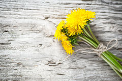 Dandelion flowers on the wooden background Stock Photo