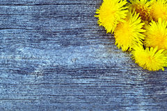 Dandelion flowers on a wooden table. Yellow dandelion flowers lying on a wooden table from old boards stock images