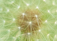 Dandelion fluff background Royalty Free Stock Photos