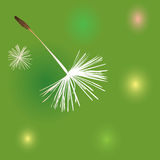 Dandelion fluffs background Royalty Free Stock Photography