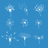 Dandelion Fluffy Flower and Seeds Set. Vector Stock Photography