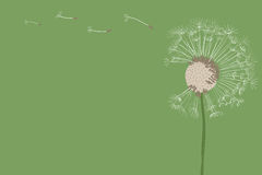 Dandelion. Fluffy dandelion seeds flying in the wind Royalty Free Stock Photo