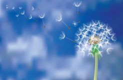 Dandelion fly Stock Images