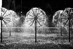 Dandelion Fountain Stock Photography