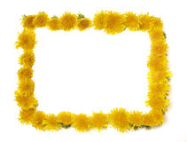 Dandelion Frame. With space for text or what you need royalty free stock images