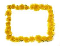 Dandelion Frame Royalty Free Stock Images