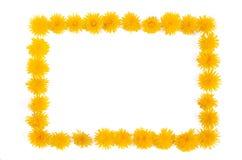 Dandelion - frame Royalty Free Stock Photos