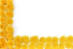 Dandelion - frame. An image of Dandelion - frame Stock Photography